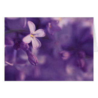 Lilacs, Blank Card, floral photography, greetings Card