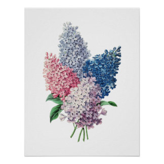 LILACS bouquet botanical print
