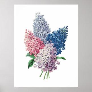 LILACS bouquet botanical print