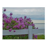 Lilacs by the Water Postcard