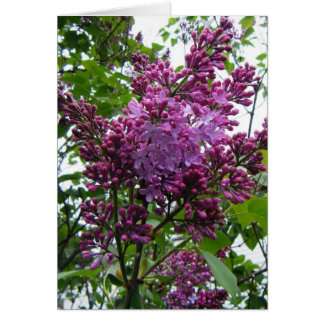 """""""Lilacs chez moi"""" Stationery Note Card"""