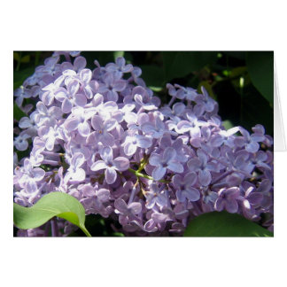Lilacs in Full Bloom Card