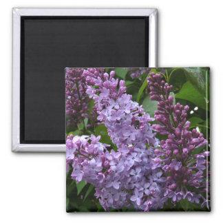 Lilacs Magnet