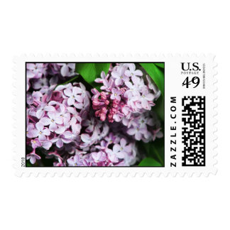 lilacs postage