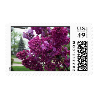 Lilacs Postage Stamp
