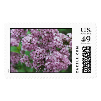 Lilacs Stamp