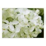 lilas blancas felicitaciones