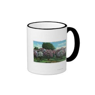 Lilas de Highland Park en la floración Taza De Café