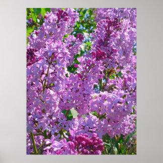 Lilas de la primavera póster