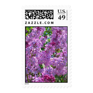 Lilas de la primavera sellos