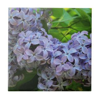 Lilas en la plena floración azulejo cuadrado pequeño