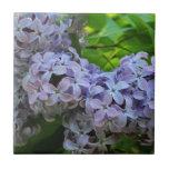 Lilas en la plena floración azulejos cerámicos