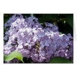 Lilas en la plena floración tarjeton