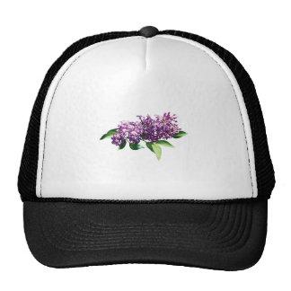 Lilas en sol gorras