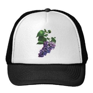Lilas púrpuras agraciadas gorras