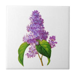 Lilas púrpuras de Pedro-José Redoute Tejas