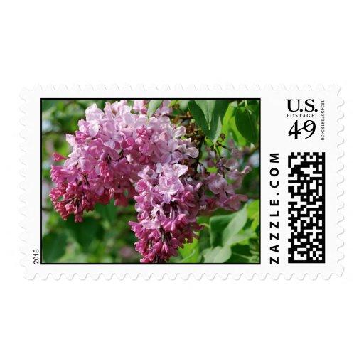 Lilas púrpuras sello
