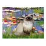 Lilies 2 - Himalayan cat 7 Post Card