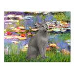 Lilies 2 - Russian Blue cat Postcard