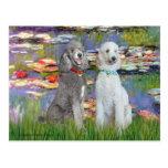 Lilies 2 - Two Standard Poodles (Slvr-Crm) Postcard