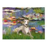 Lilies 2 - Whippet #2 Postcard