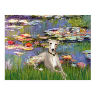 Lilies 2 - Whippet #2 Postcards