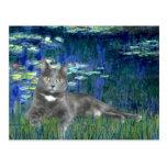 Lilies 5 - Grey cat Postcard