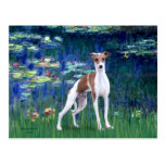 Lilies 5 - Italian Greyhound Postcard
