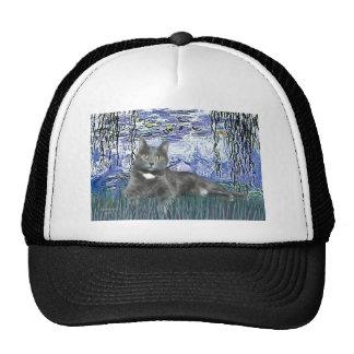 Lilies 6 - Grey cat Hat