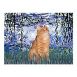 Lilies 6 - Orange Tabby cat 46 Postcards