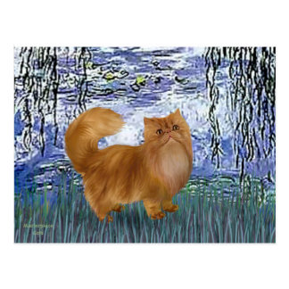 Lilies 6 - Red Persian cat Postcard