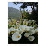 Lilies at Calla Lily Plantation, Taiwan Cards