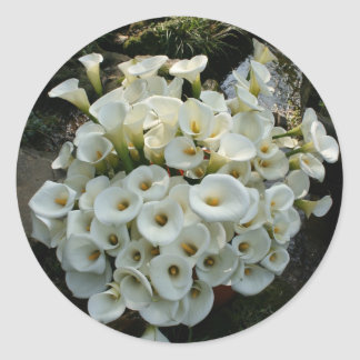 Lilies at Calla Lily Plantation, Taiwan Classic Round Sticker