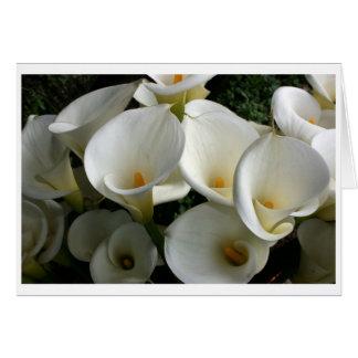 Lilies at Calla Lily Plantation, Taiwan Greeting Card
