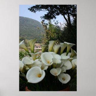 Lilies at Calla Lily Plantation Taiwan Poster