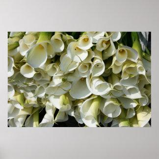 Lilies at Calla Lily Plantation Taiwan Print