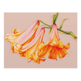 """""""lilies"""" fine art on beige postcard"""