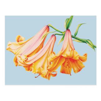 """lilies"" fine art on blue postcard"