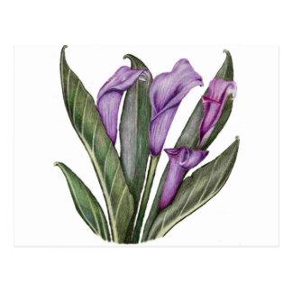 Lilies Floral  Art Postcards