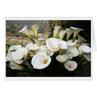 Lilies growing at Calla Lily Plantation, Taiwan Greeting Card