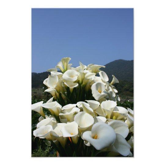 Lilies growing at Calla Lily Plantation, Taiwan Photo Print
