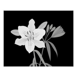 Lilies Illustration in Monochrome Poster