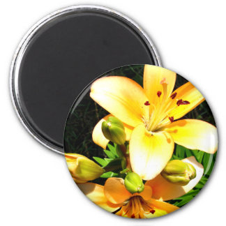 Lilies in Bloom Photograph Magnet