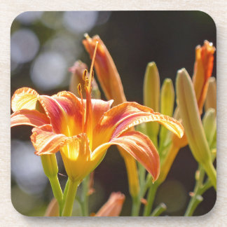 Lilies in the Sunshine Coaster
