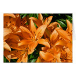 Lilies Note Card