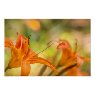 Lilies on a Sunny Day Poster