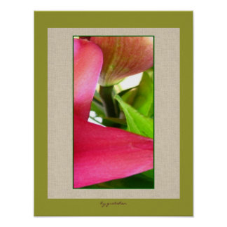 Lilies Up Close Photo Poster by gretchen