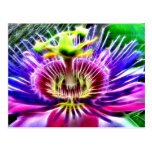 Lilikoi or Passion Flower Post Card