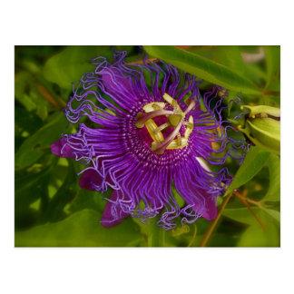 Lilikoi or Passion Flower Postcard