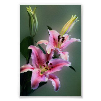 Lilium Bouquet Poster